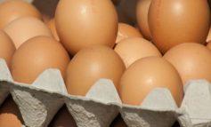 Употребление яиц временно ограничили в детских учреждениях Нерюнгринского района