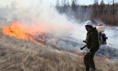 За прошедшие сутки локализовано 6 и ликвидировано 17 природных пожаров