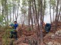 За сутки в Якутии ликвидировано 12 природных пожаров на площади 8,4 тыс га