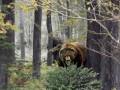 Медведь убил грибника в Хабаровском крае