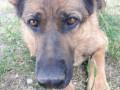 Служебная собака задержала угонщика автомобиля в Якутске