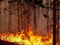 Лесной пожар на площади 17 га действует в Сунтарском районе Якутии