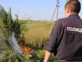 МВД проверит жителя Якутии, попросившего разрешения на посадку конопли