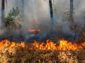 Более 150 природных пожаров действует в Якутии