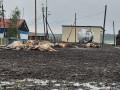 Одиннадцать коров погибло из-за обрыва электропровода в Якутии