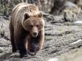 Медведь напал на пожилого мужчину в Среднеколымском районе Якутии