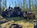 Заблудившуюся в лесу жительницу Якутии нашли спустя два дня