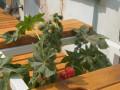 Владелец кафе в Якутске приобрел ядовитое растение в Ботаническом саду