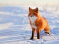Уголовное дело по факту жестокого обращения с животным возбудили в Сунтарском районе Якутии