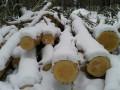 Лес на сумму около 600 тысяч рублей незаконно вырубили в Сунтарском районе Якутии