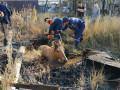 Спасатели вызволили застрявшую в яме лошадь в Якутске